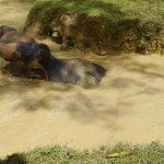 Elephants playing in the natural pool