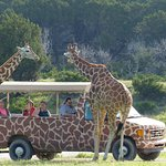 Foto di Foothills Safari Camp at Fossil Rim