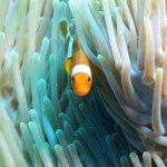 Manta Dive Gili Air Resort Aufnahme