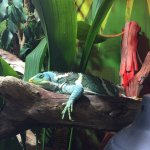 A great array of reptiles and amphibians.