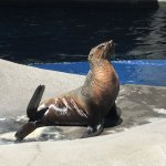 The seals <3