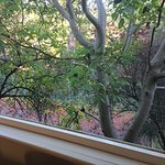 View from the open bifold window