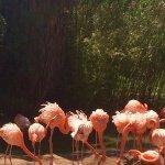 Foto de Zoo de Barcelona