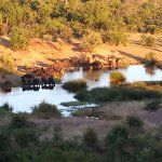 Come early to breakfast and see the animals at the water holes