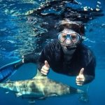 Swimming peacefully with a beautiful Black Tip Shark