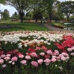 Photo of Showa Kinen Park