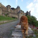 Cats of Carcassonne - an unofficial gatekeeper