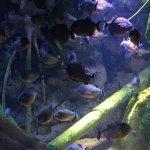 Ripley's Aquarium Of Canada Foto
