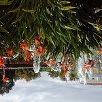 Marbella Playa Hotel صورة فوتوغرافية