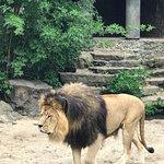 Foto de Artis Zoo