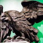 A fearless eagle