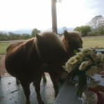 Miniture Horses joining us for a treat.
