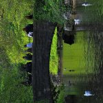 Photo de St Stephen's Green