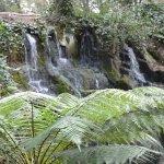 Waterfall in the fern garden.