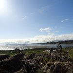 5 minute walk from hotel - Courtenay River estuary