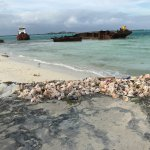 Conch Shells and Ship wrecks