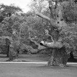 beautiful gnarled trees