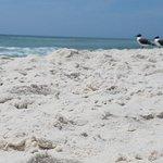 Foto de Osprey on the Gulf