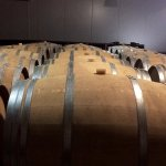 Barricas de roble llenas de vino.