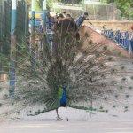 Vallee des Oiseaux Foto
