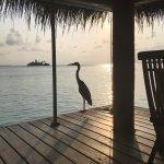 Photo de Rihiveli by Castaway Hotels & Escapes
