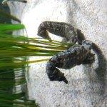 Foto di Sea Life London Aquarium