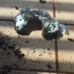 Wasp nest destroyed by maintanence!