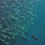 Photo of Divers Paradise Komodo