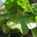 Botanical Gardens of Nevis Photo
