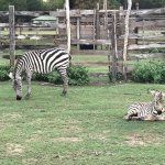 Calauit Wildlife Sanctuary Foto