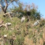 Photo of Le Parc Ornithologique de Pont de Gau