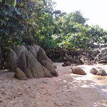 Adadan bir görüntü