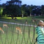 20 impalas arrive as we drink sundowner on restaurant terrace