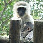 Monkeys in the outdoor shower