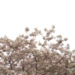 Foto de Shinjuku Gyoen National Garden