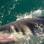 Foto de Great White Shark Tours