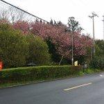 雪窦山整個山區都有很多花樹, 3及4月正值開花期, 漫山遍野都開滿春花, 很漂亮