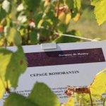 Conservatoire des Vignes : Visite Libre et Gratuite