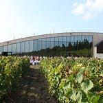 Salle De Réception au milieu des vignes