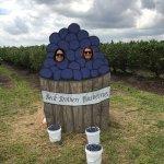 Beck Brothers blueberries U-Pick