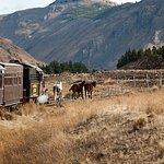 Caballos en el camino. Foto: Luiggi Fotos