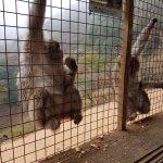 Monkey Park Feeding Area
