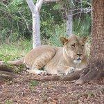 Zoo Miami Foto