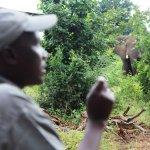 Moses on walking safari with elephant!