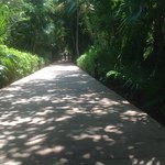 The walkway between main entrance and pool/beach area, All rooms are off the walkway to the left