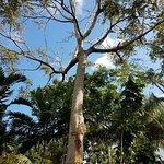 Photo of Deerfield Beach Arboretum