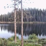 Lodgepole pines on the shore of Michigan Reservoir