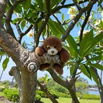 Found a good climbing tree at Anaehoomalu Bay, I guess being small and cute allows me to get awa