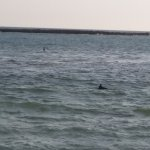 Dolphin sightings from outside patio :)
