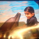 Amazing experience to be close to the dolphin .my little boy wish .